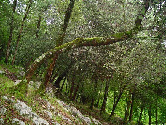 Bosque en el monte Ereñozar